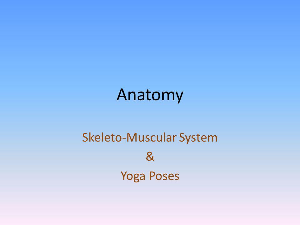vastus-intermedius Origin: Anterior & lateral shaft of femur End: Patellar tendon (quadriceps tendon to patella), via ligamentum patellae into tubercle of tibia Actions: Knee extension