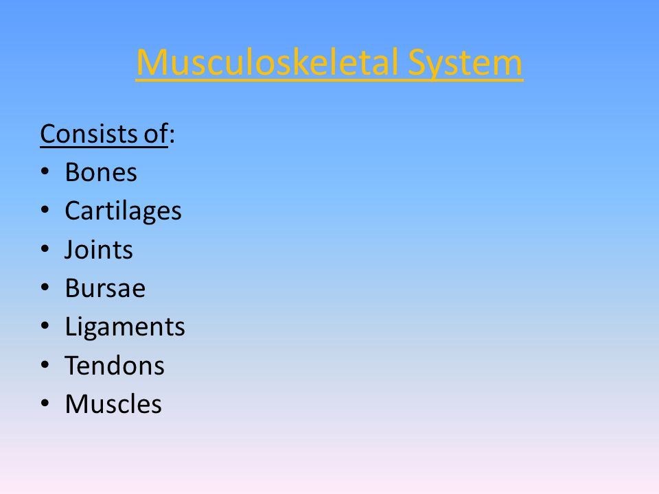 Musculoskeletal System Consists of: Bones Cartilages Joints Bursae Ligaments Tendons Muscles