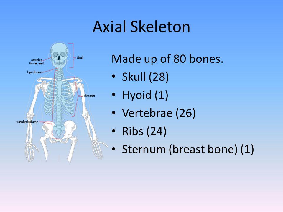 Appendicular Skeleton Made up of 126 bones.