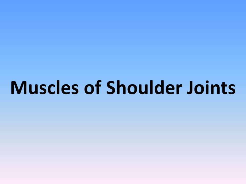 Muscles of Shoulder Joints