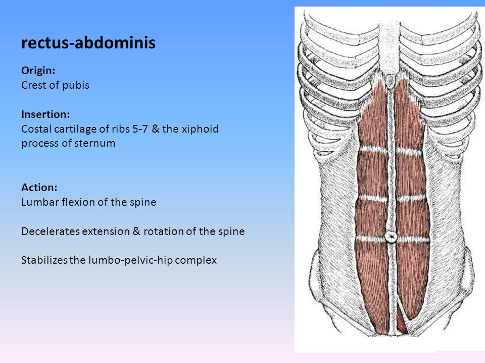rectus-abdominis Origin: Crest of pubis Insertion: Costal cartilage of ribs 5-7 & the xiphoid process of sternum Action: Lumbar flexion of the spine D