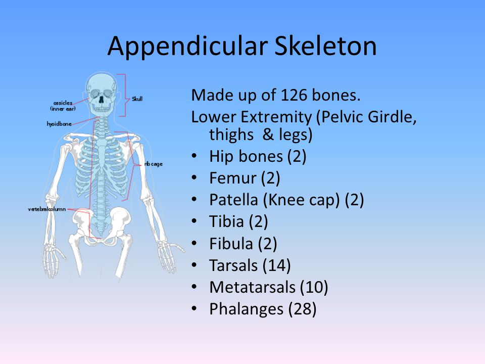 Sartorius Origin: Anterior superior iliac spine (ASIS) End Medial condyle of the tibia Actions: Assists in hip flexion, abduction & external rotation Assists in knee flexion