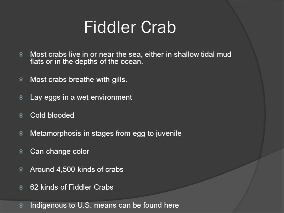 Fiddler Crab  Most crabs live in or near the sea, either in shallow tidal mud flats or in the depths of the ocean.  Most crabs breathe with gills. 