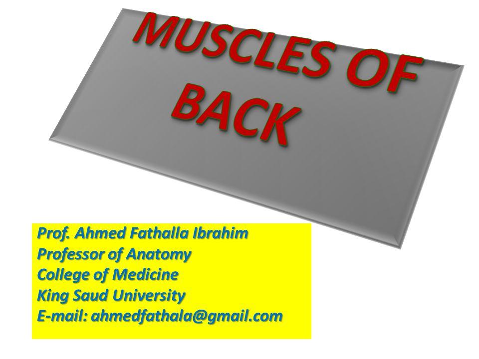 Prof. Ahmed Fathalla Ibrahim Professor of Anatomy College of Medicine King Saud University E-mail: ahmedfathala@gmail.com
