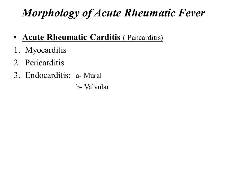 Morphology of Acute Rheumatic Fever Acute Rheumatic Carditis ( Pancarditis) 1.Myocarditis 2.Pericarditis 3.Endocarditis: a- Mural b- Valvular