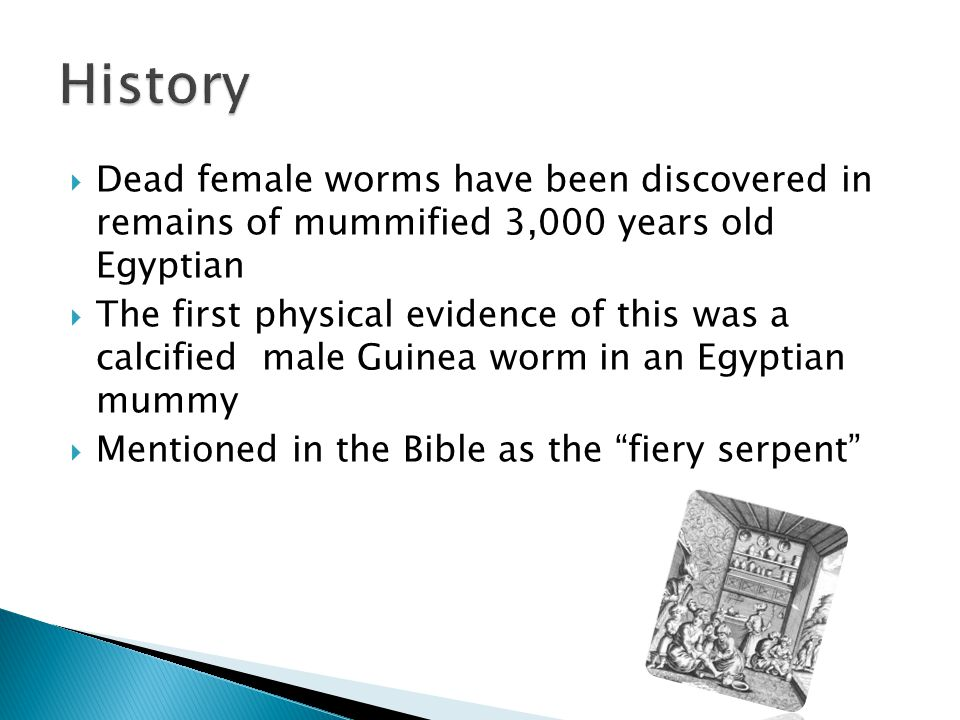 Dead female worms have been discovered in remains of mummified 3,000 years old Egyptian  The first physical evidence of this was a calcified male Guinea worm in an Egyptian mummy  Mentioned in the Bible as the fiery serpent