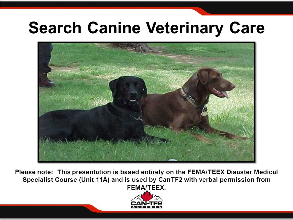 Summary Canine preventive medicine Emergency veterinary care Canine evaluation Illness and injury in urban search and rescue Euthanasia Post-deployment surveillance