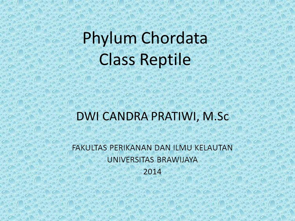 Phylum Chordata Class Reptile DWI CANDRA PRATIWI, M.Sc FAKULTAS PERIKANAN DAN ILMU KELAUTAN UNIVERSITAS BRAWIJAYA 2014