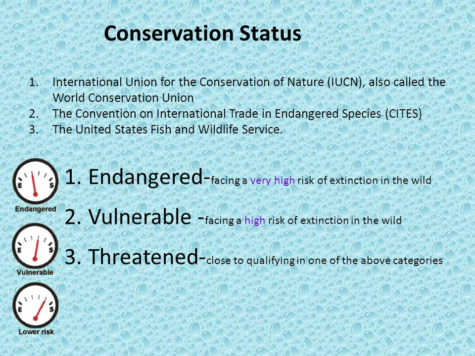 Conservation Status 1.Endangered- facing a very high risk of extinction in the wild 2.Vulnerable - facing a high risk of extinction in the wild 3.Thre