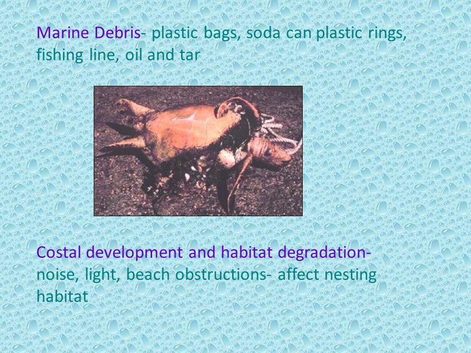 Marine Debris- plastic bags, soda can plastic rings, fishing line, oil and tar Costal development and habitat degradation- noise, light, beach obstruc
