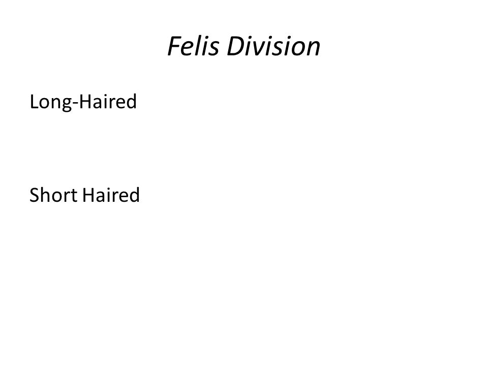 Felis Division Long-Haired Short Haired