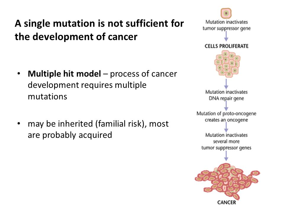 A single mutation is not sufficient for the development of cancer Multiple hit model – process of cancer development requires multiple mutations may b