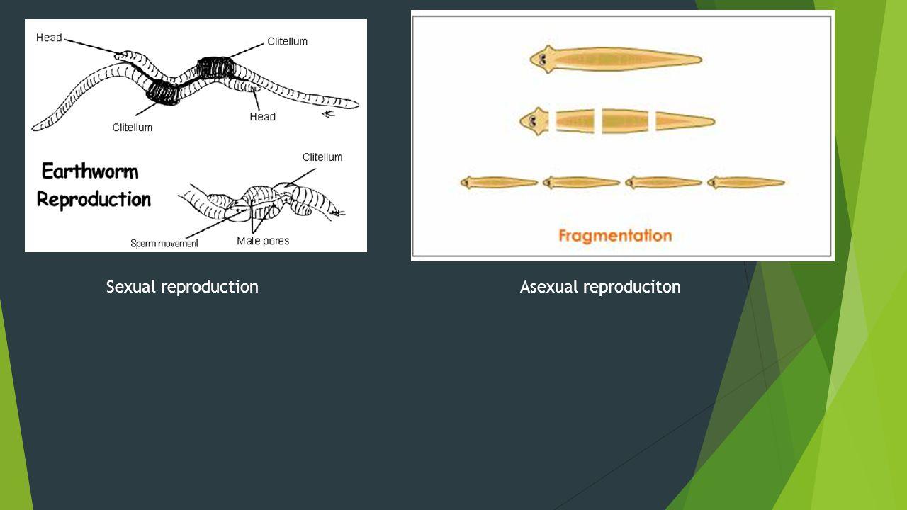 Sexual reproductionAsexual reproduciton
