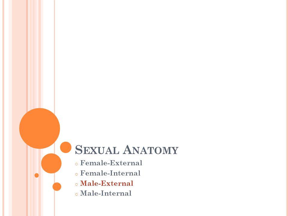 M ALE E XTERNAL S EX O RGANS The external sexual organs of the human male: Scrotum Testes Penis