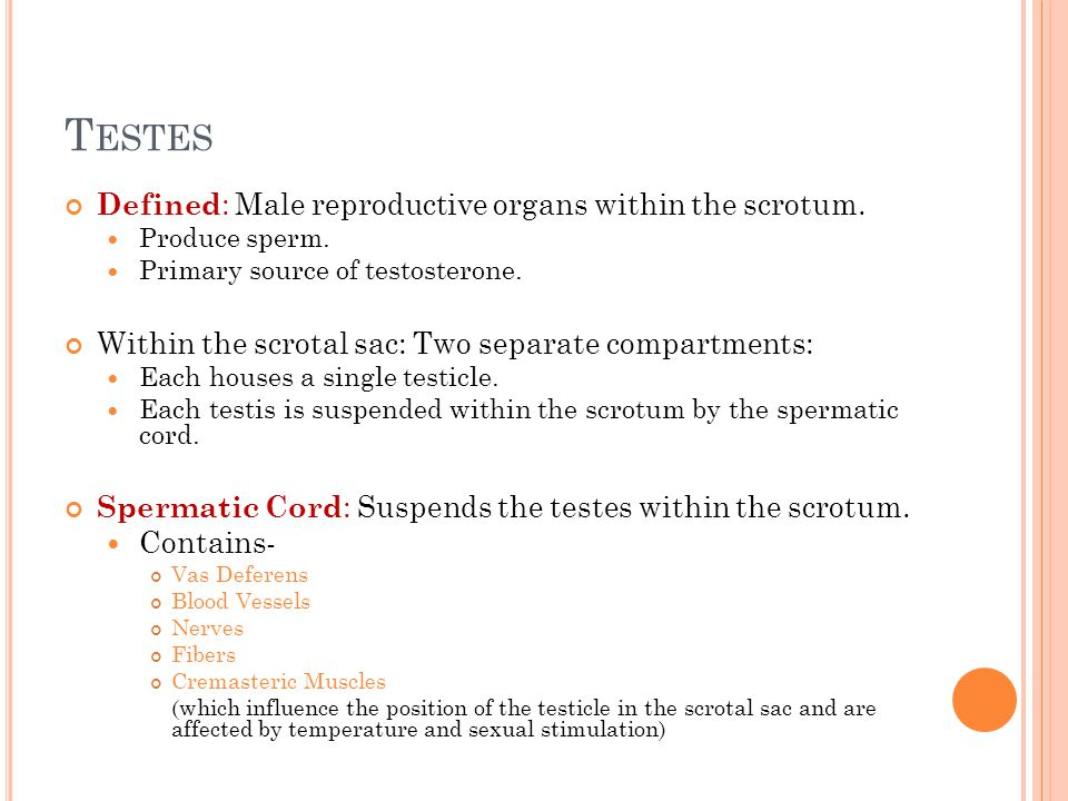 T ESTES Defined : Male reproductive organs within the scrotum.