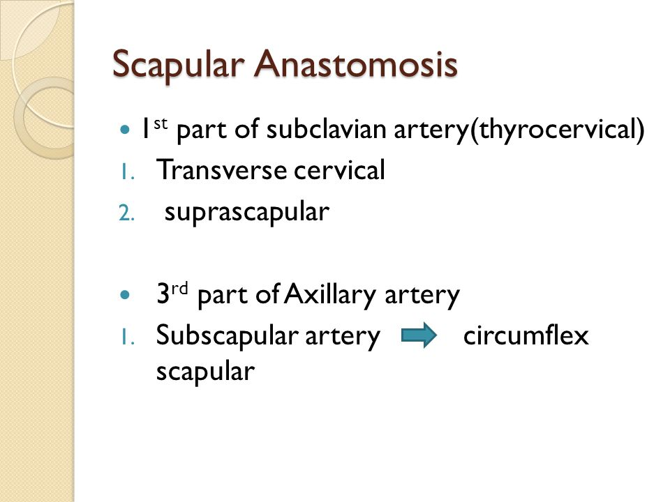 Scapular Anastomosis 1 st part of subclavian artery(thyrocervical) 1. Transverse cervical 2. suprascapular 3 rd part of Axillary artery 1. Subscapular