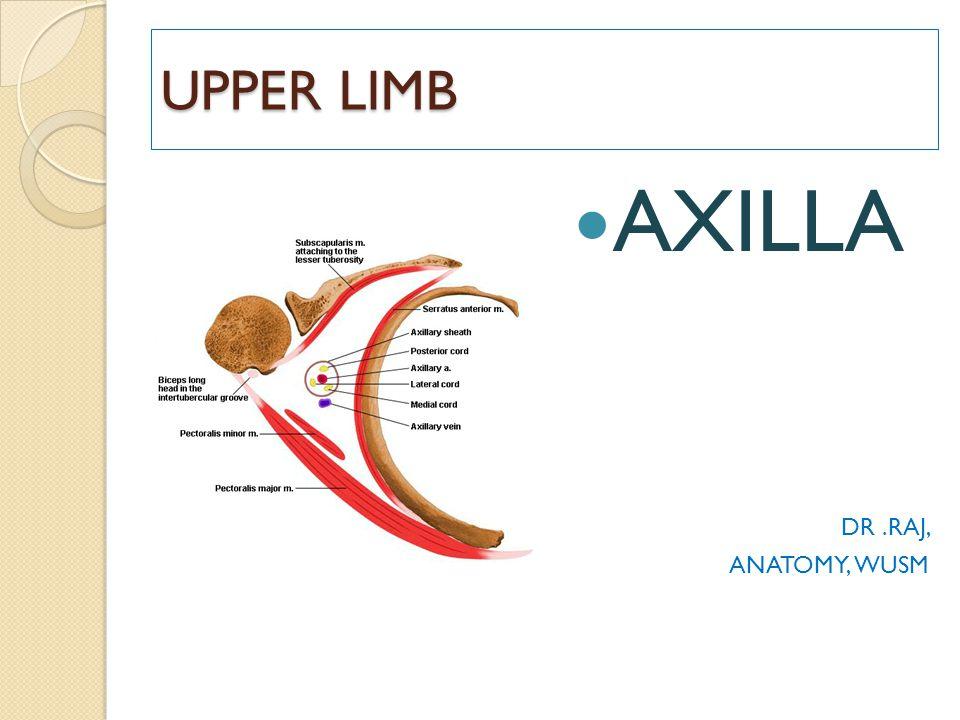UPPER LIMB AXILLA DR.RAJ, ANATOMY, WUSM