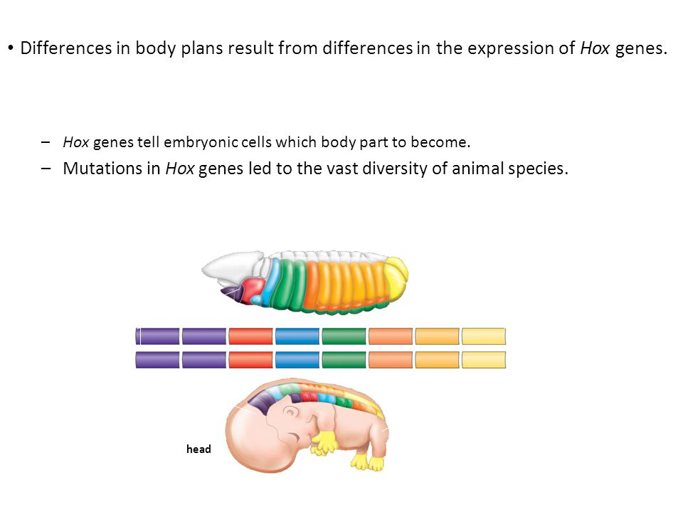 Animals are grouped using a variety of criteria.