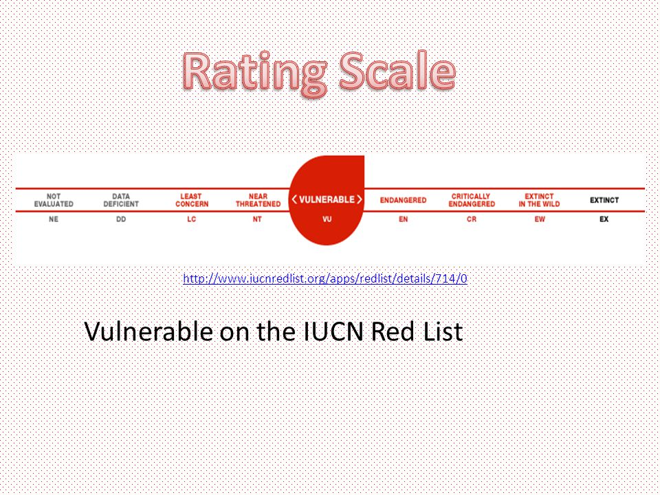 http://www.iucnredlist.org/apps/redlist/details/714/0 Vulnerable on the IUCN Red List