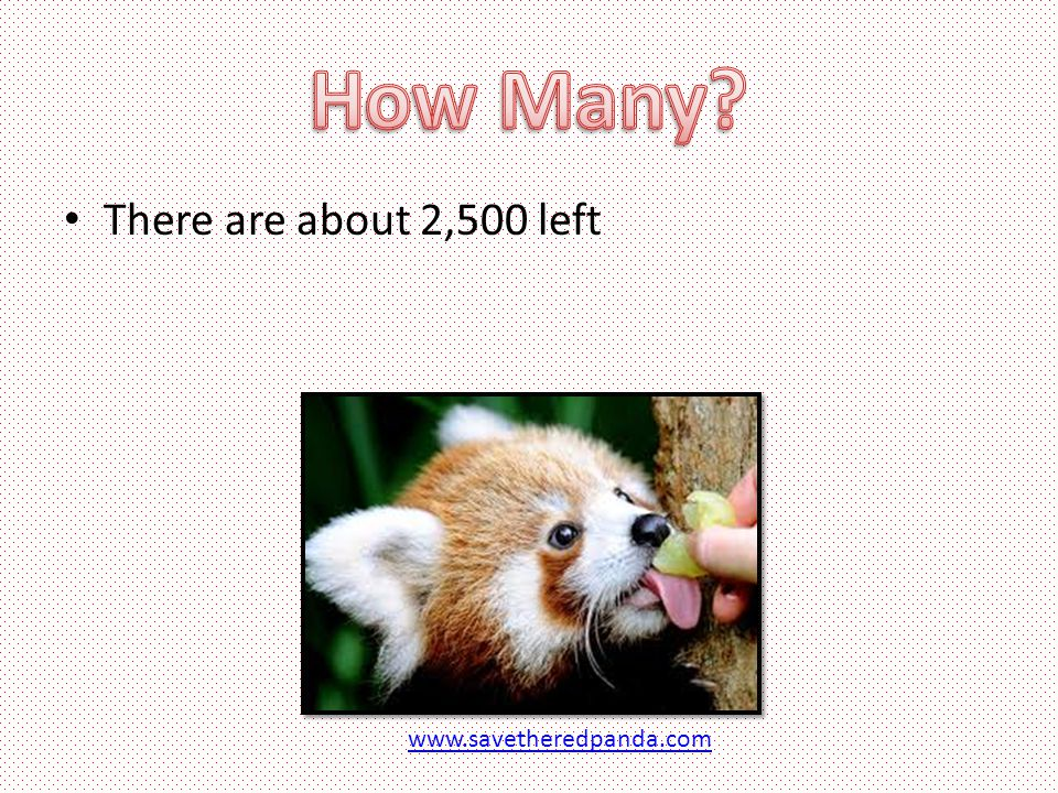There are about 2,500 left www.savetheredpanda.com