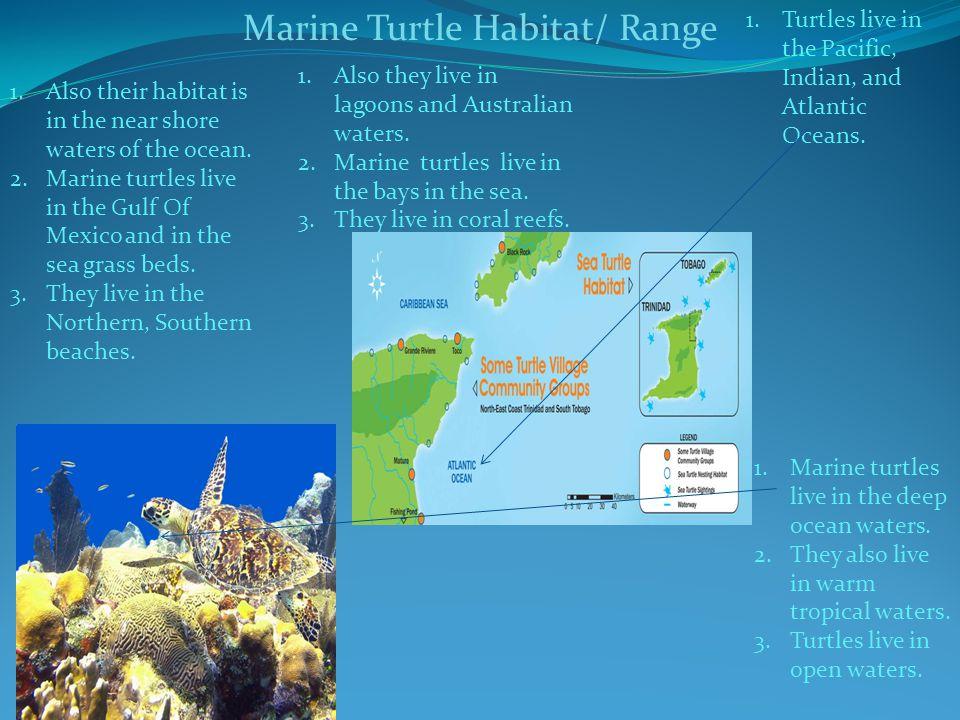 Marine Turtle Habitat/ Range 1.Marine turtles live in the deep ocean waters. 2.They also live in warm tropical waters. 3.Turtles live in open waters.