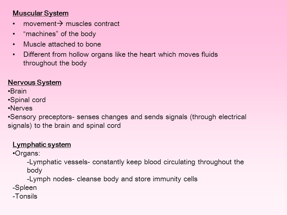 "Muscular System movement  muscles contract "" machines "" of the body Muscle attached to bone Different from hollow organs like the heart which moves f"