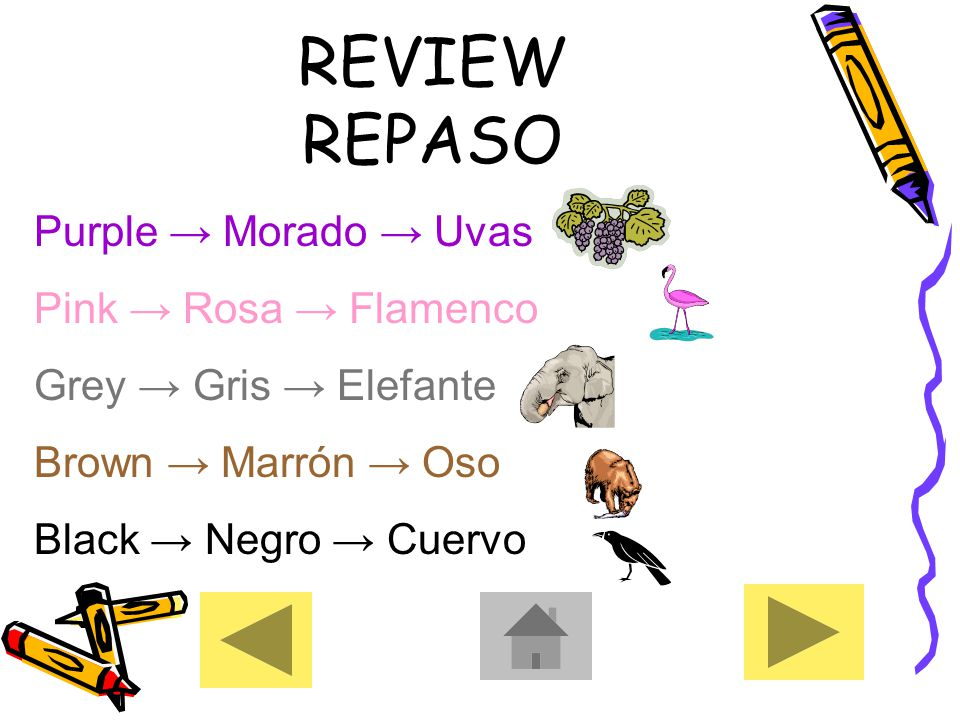 REVIEW REPASO Purple → Morado → Uvas Pink → Rosa → Flamenco Grey → Gris → Elefante Brown → Marrón → Oso Black → Negro → Cuervo