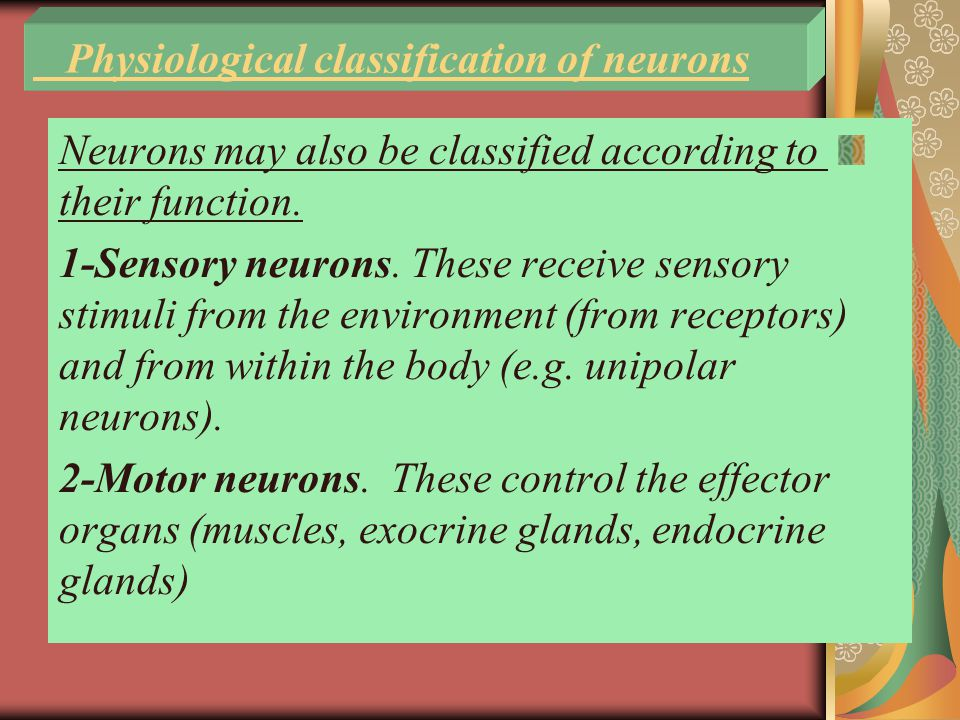 Physiological classification of neurons Neurons may also be classified according to their function.