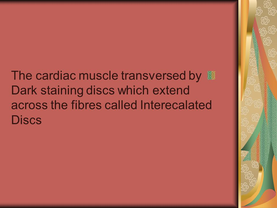 The cardiac muscle transversed by Dark staining discs which extend across the fibres called Interecalated Discs