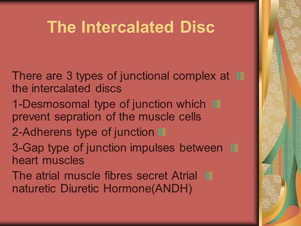 The Intercalated Disc There are 3 types of junctional complex at the intercalated discs 1-Desmosomal type of junction which prevent sepration of the muscle cells 2-Adherens type of junction 3-Gap type of junction impulses between heart muscles The atrial muscle fibres secret Atrial naturetic Diuretic Hormone(ANDH)