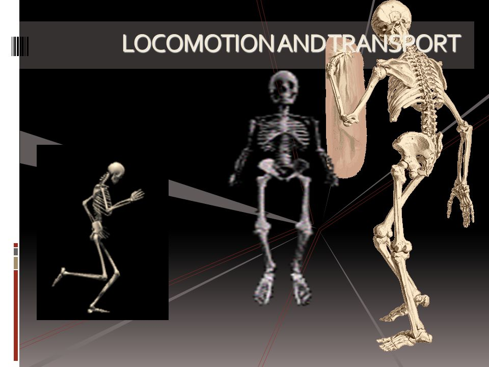 CONCEPT MAP OF CHAPTER 2 LOCOMOTION & SUPPORT LOCOMOTION & SUPPORT IN HUMANS & ANIMALS TYPES OF SKELETON Exoskeleton Endoskeleton Axial skeleton Appendicular skeleton Hydrostatic skeleton Muscles, ligaments & tendon Birds Fish Grasshopper Earthworms LOCOMOTION SUPPORT IN PLANTS AQUATIC PLANTS TERRESTRIAL PLANTS