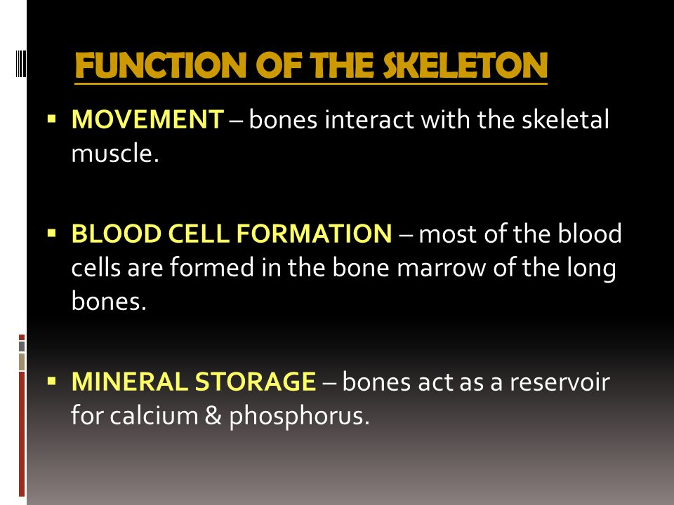 FUNCTION OF THE SKELETON  MOVEMENT – bones interact with the skeletal muscle.  BLOOD CELL FORMATION – most of the blood cells are formed in the bone