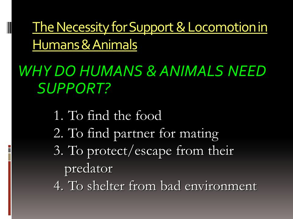 The Necessity for Support & Locomotion in Humans & Animals WHY DO HUMANS & ANIMALS NEED SUPPORT? 1. To find the food 2. To find partner for mating 3.