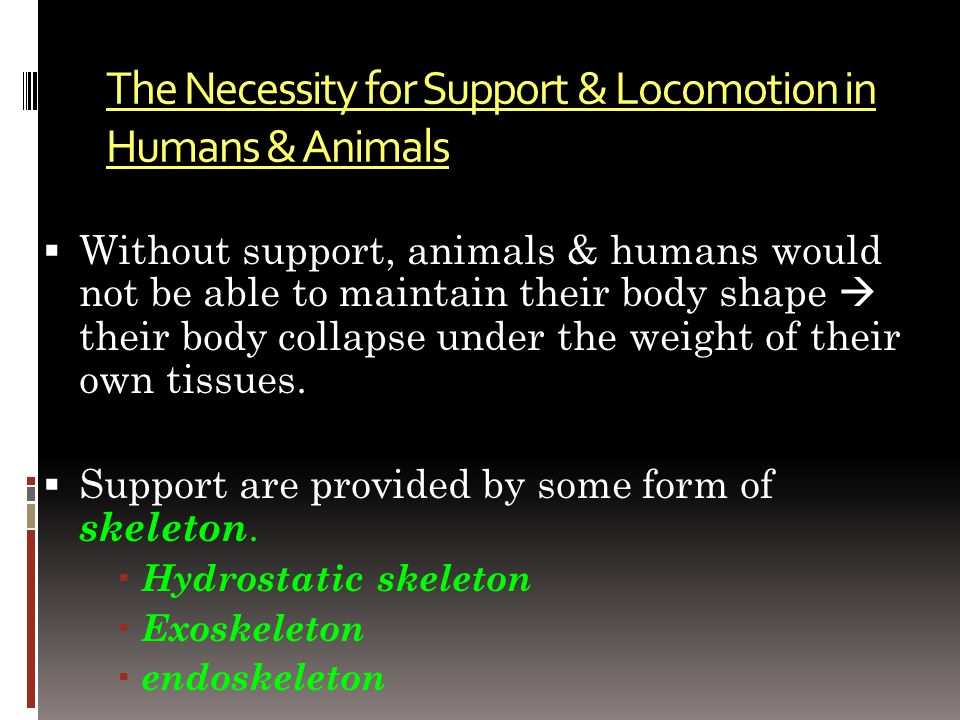 Support are provided by some form of skeleton: 1.Hydrostatic skeleton 2.Exoskeleton 3.Endoskeleton
