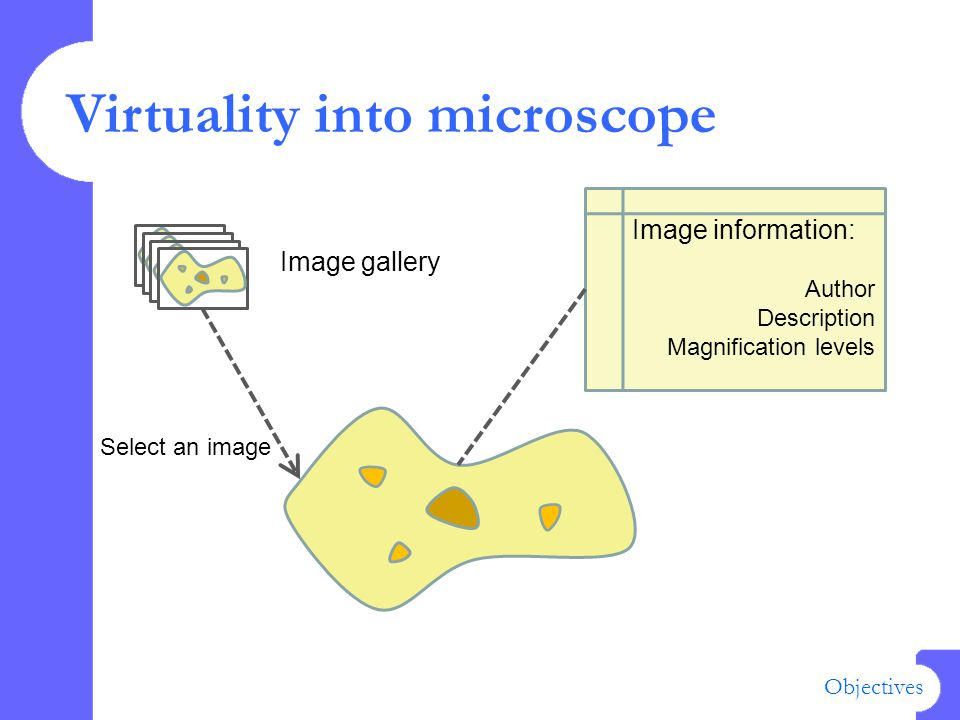 Virtuality into microscope Objectives Image gallery Image information: Author Description Magnification levels Select an image