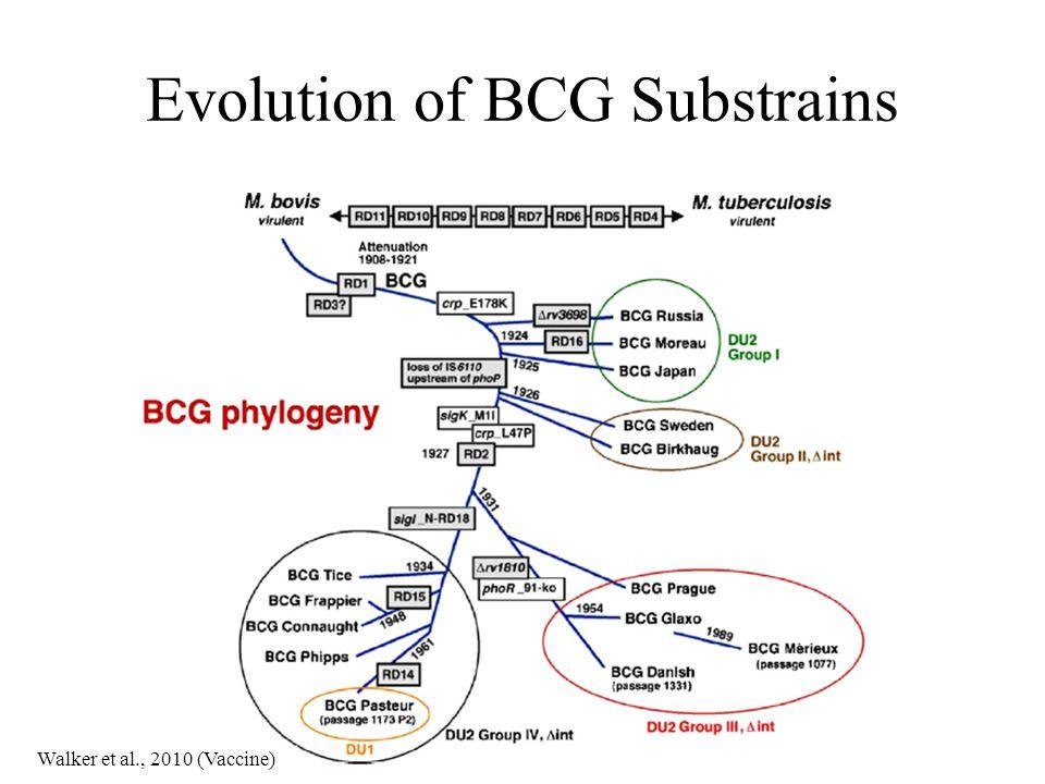 Evolution of BCG Substrains Walker et al., 2010 (Vaccine)