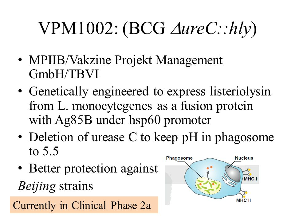 VPM1002: (BCG  ureC::hly) MPIIB/Vakzine Projekt Management GmbH/TBVI Genetically engineered to express listeriolysin from L.