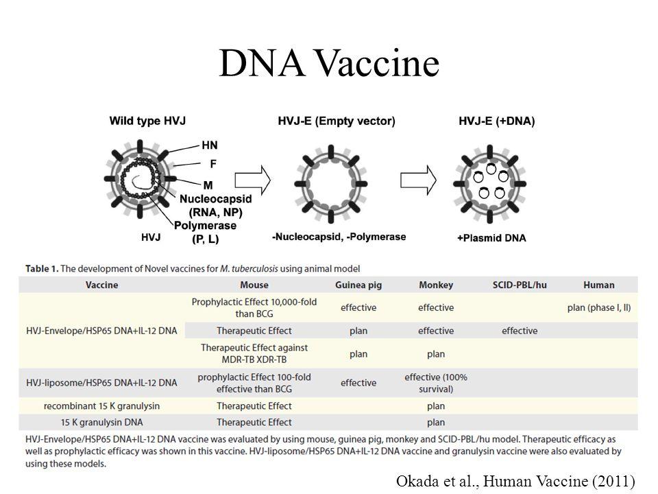 DNA Vaccine Okada et al., Human Vaccine (2011)