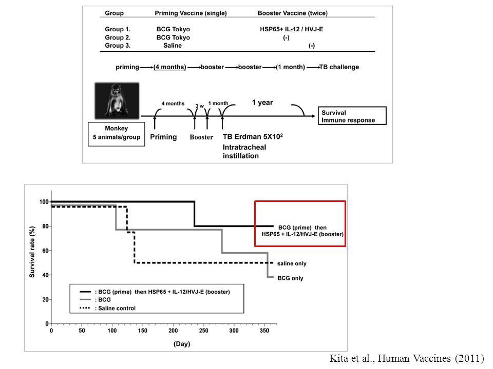 Kita et al., Human Vaccines (2011)