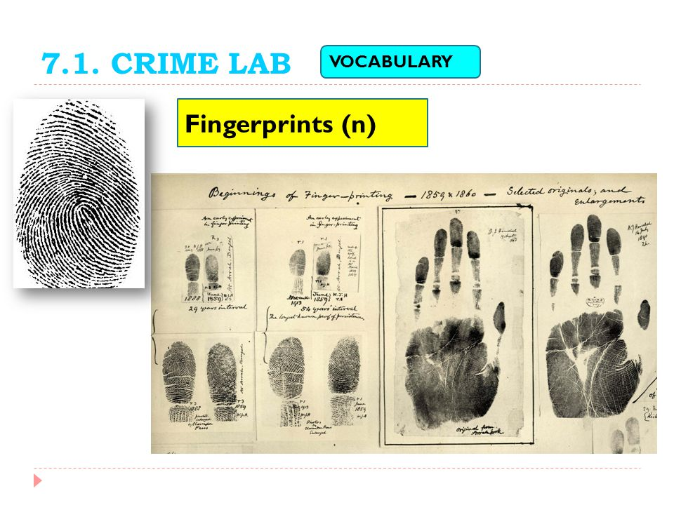 7.1. CRIME LAB VOCABULARY Fingerprints (n)