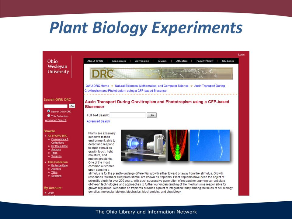 Plant Biology Experiments
