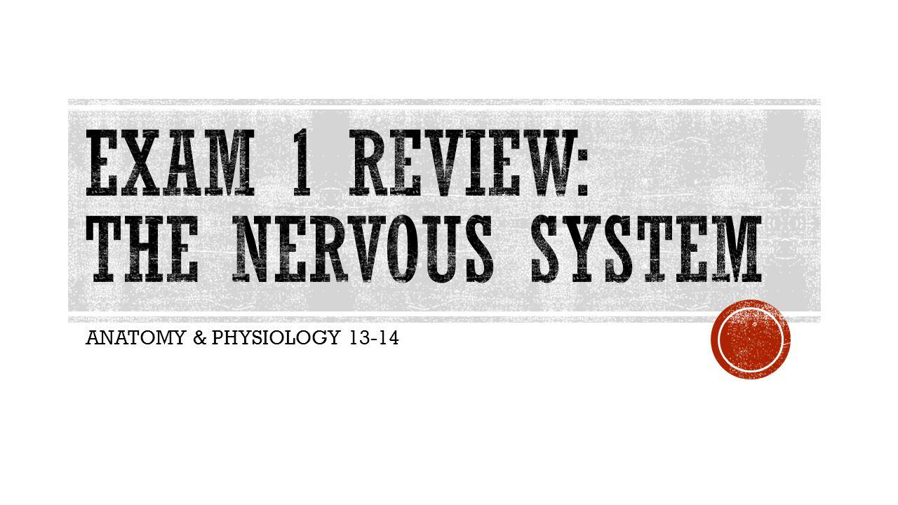 ANATOMY & PHYSIOLOGY 13-14