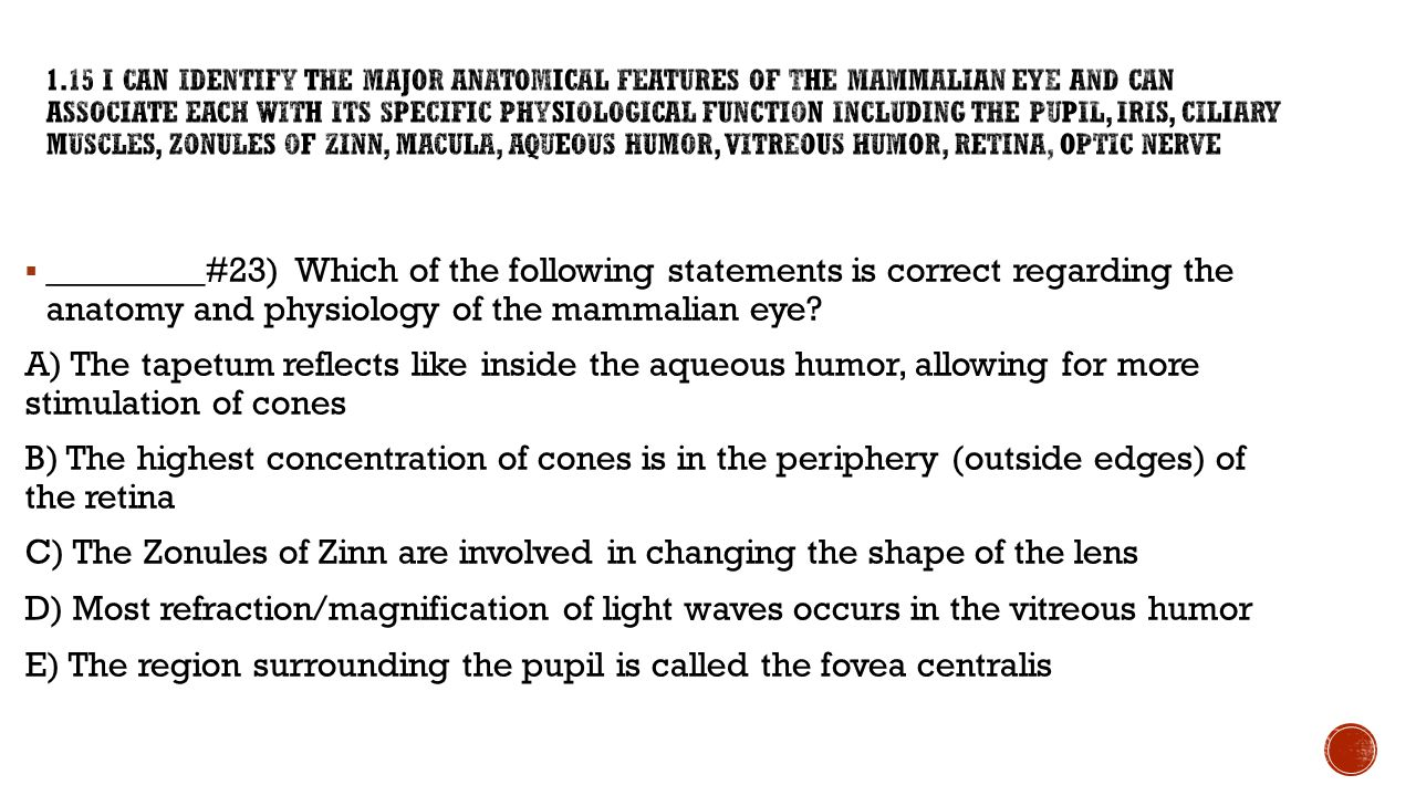  _________#23) Which of the following statements is correct regarding the anatomy and physiology of the mammalian eye? A) The tapetum reflects like i