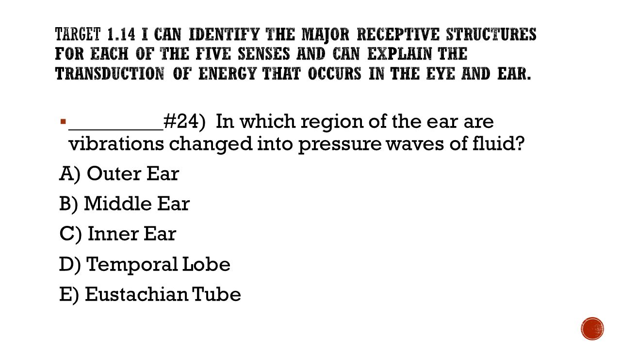  _________#24) In which region of the ear are vibrations changed into pressure waves of fluid? A) Outer Ear B) Middle Ear C) Inner Ear D) Temporal Lo