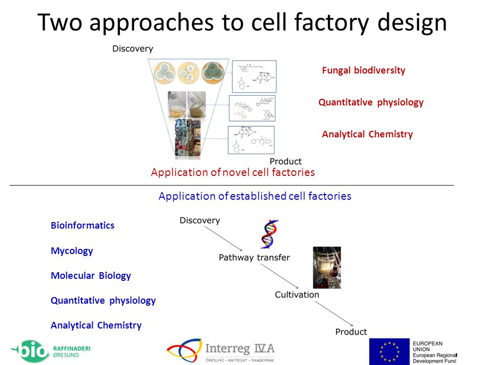 Two approaches to cell factory design Mycology Bioinformatics Molecular Biology Quantitative physiology Analytical Chemistry Fungal biodiversity Quantitative physiology Analytical Chemistry Application of novel cell factories Application of established cell factories