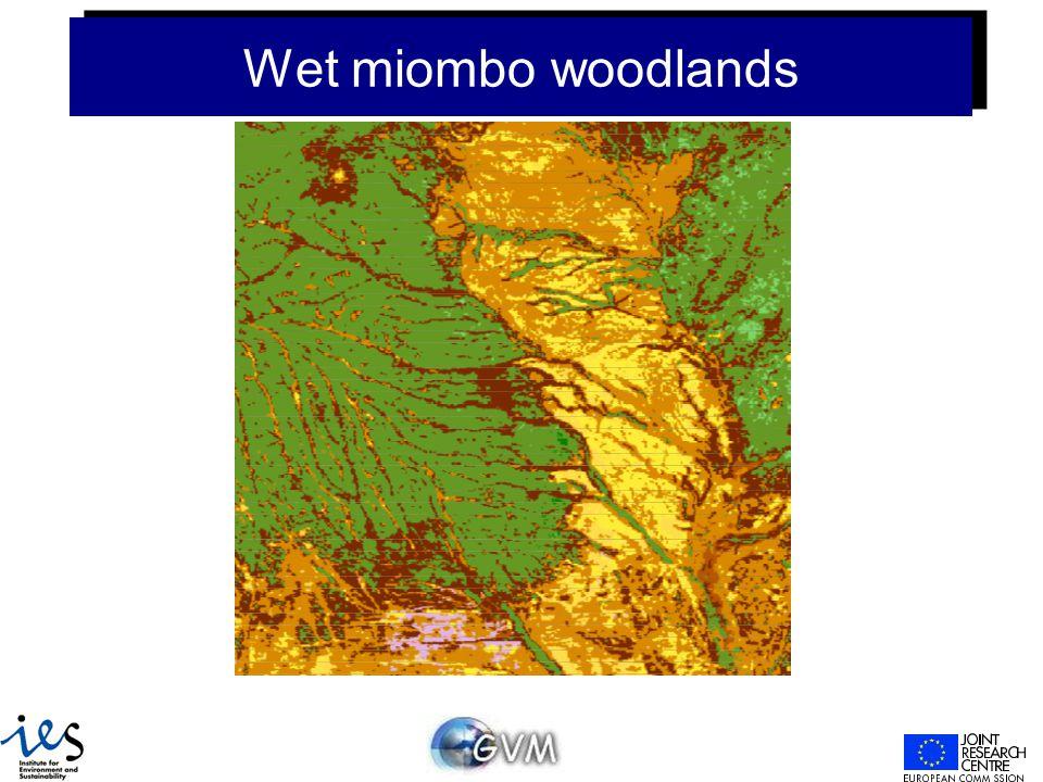 Wet miombo woodlands