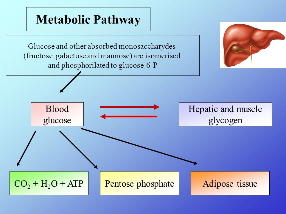 Metabolic Pathway Glucose and other absorbed monosaccharydes (fructose, galactose and mannose) are isomerised and phosphorilated to glucose-6-P Blood glucose Hepatic and muscle glycogen CO 2 + H 2 O + ATPPentose phosphateAdipose tissue