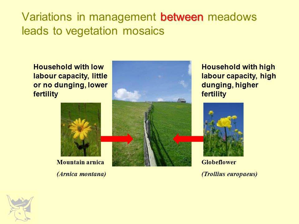within Variations in management within meadows adds to these vegetation mosaics Furthest area from barn, less dung, mown once, dense cover of kidney vetch, small blue present Close to barn, more dung, mown twice, no kidney vetch, small blue absent (but other species tolerant of higher fertility and earlier mowing present)