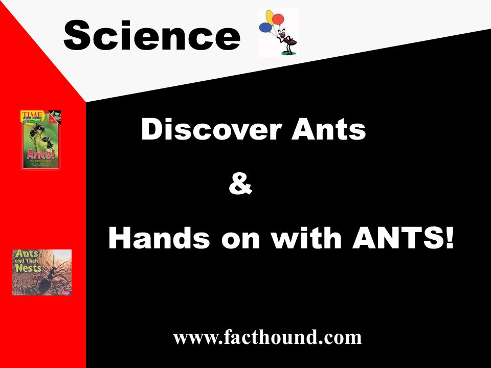 Science Discover Ants & Hands on with ANTS! www.facthound.com