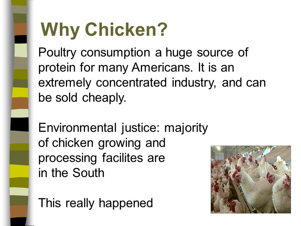 Why Chicken? Poultry consumption a huge source of protein for many Americans. It is an extremely concentrated industry, and can be sold cheaply. Envir